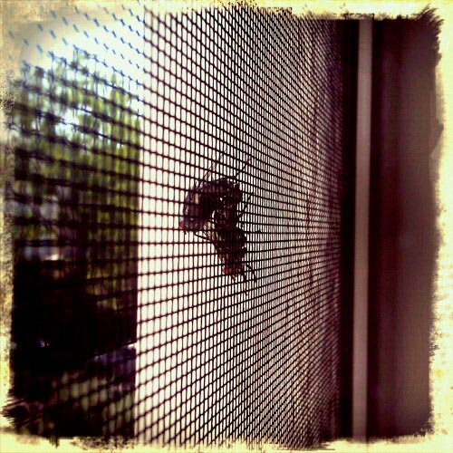 flies having sex on a screen